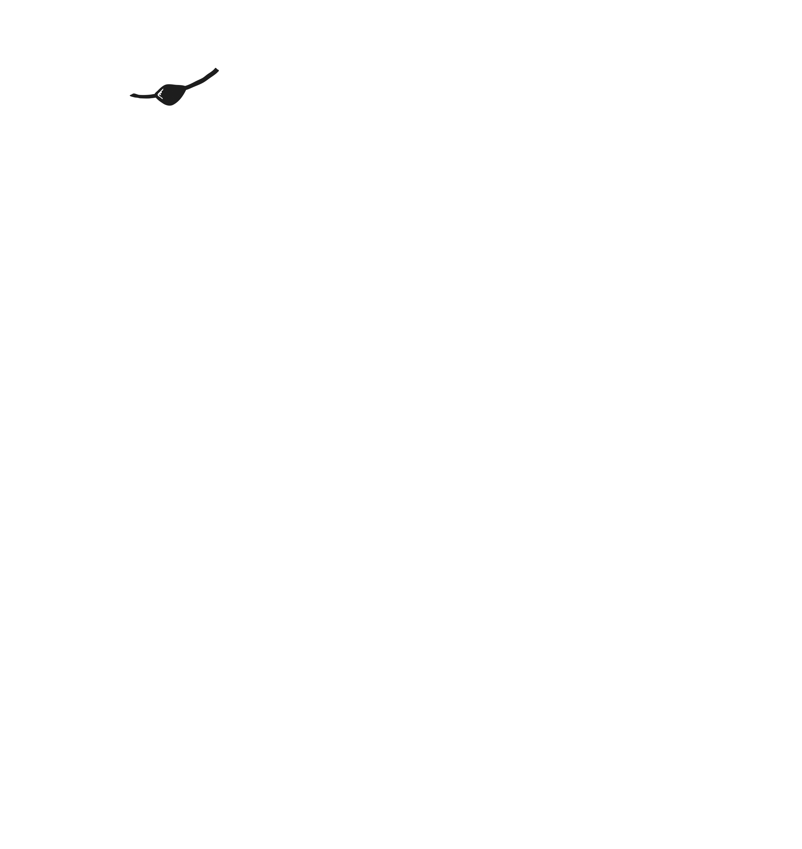 Forever Lucky Films / New England & Mid-Atlantic Videography